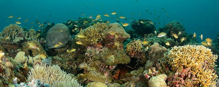 Best snorkeling on beautiful shallow coral reef